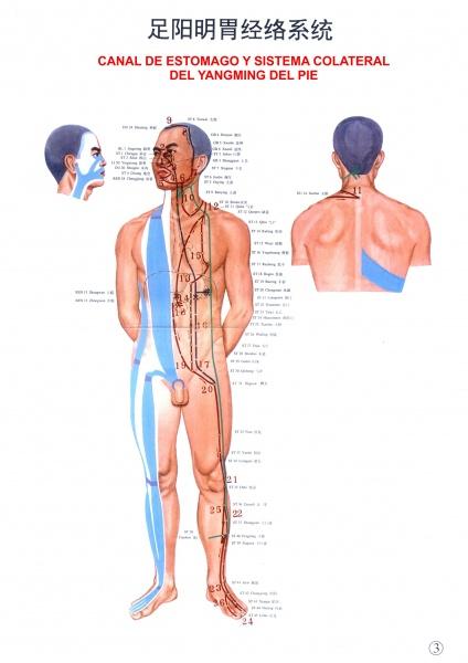 Las separaciones sanguíneas al embarazo y el dolor en la espalda
